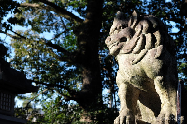 afternoon-light komainu Goryojinjya shrine Kyoto