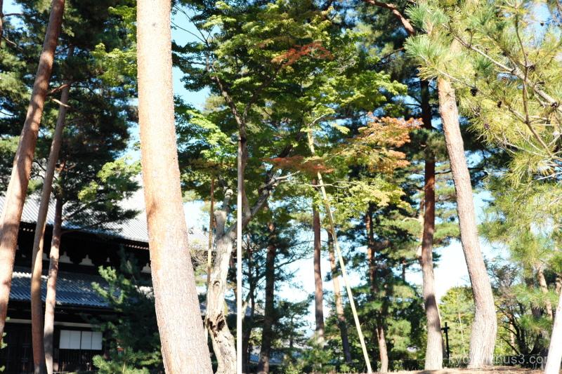 autumn-colors Shokokuji temple Kyoto