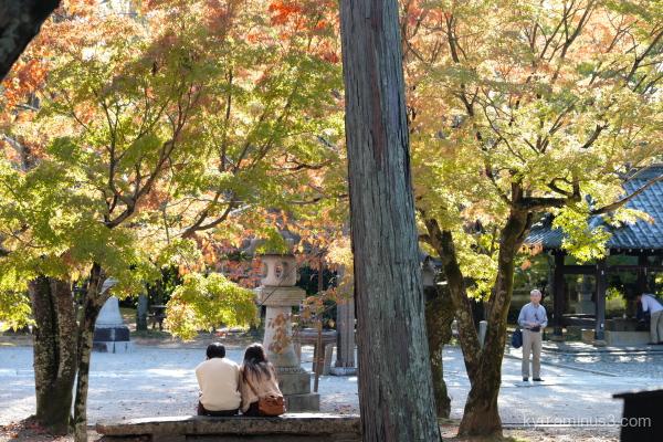 autumn red-maple Shinnyodo temple Kyoto