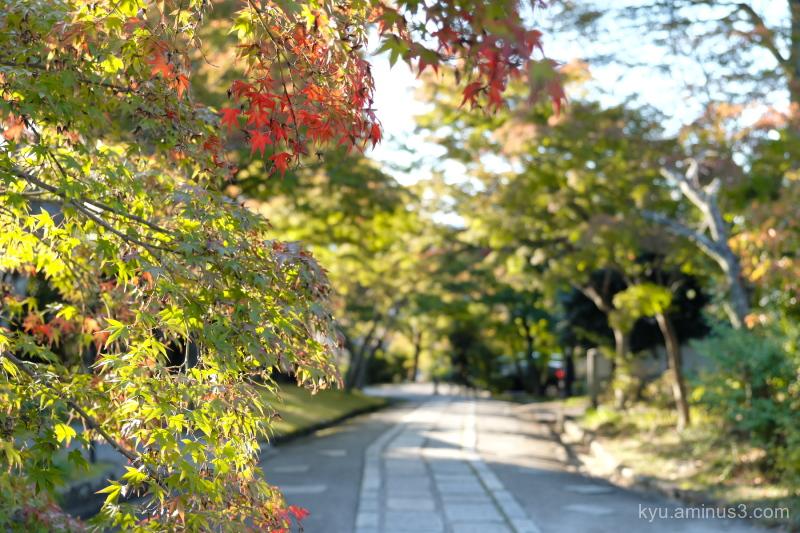 afternoon-light autumn red-maple Shinnyodo temple
