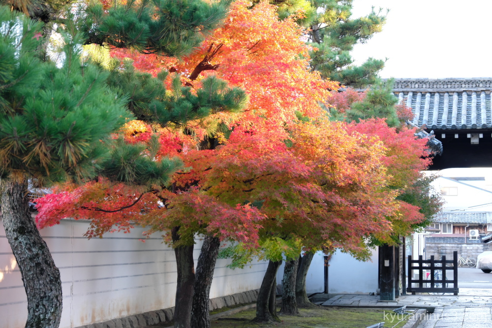 autumn red-maple Myokenji temple Kyoto