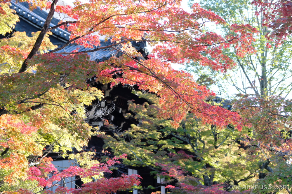 autumn red-maple Shinnyodo temple Kyoto