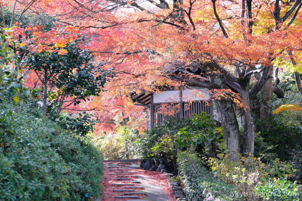 autumn red-maple Yoshiminedera temple Kyoto