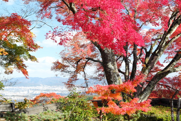 autumn view red-maple Yoshiminedera temple Kyoto