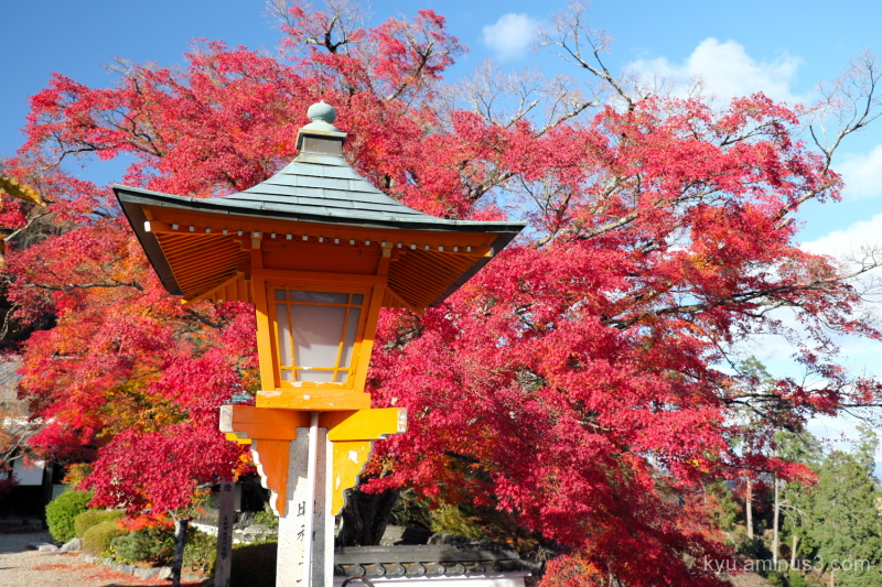 autumn red-maple vermilion Yoshiminedera temple Ky