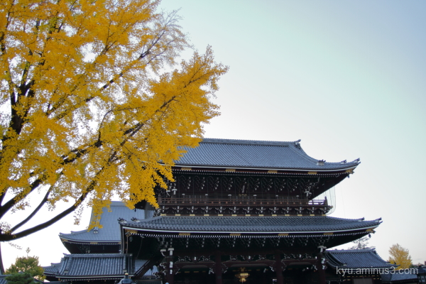 autumn ginkgo Higashihonganji temple
