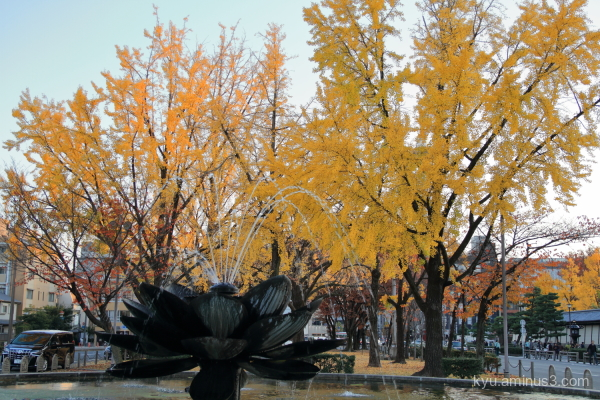 autumn gingko Higashihonganji temple Kyoto