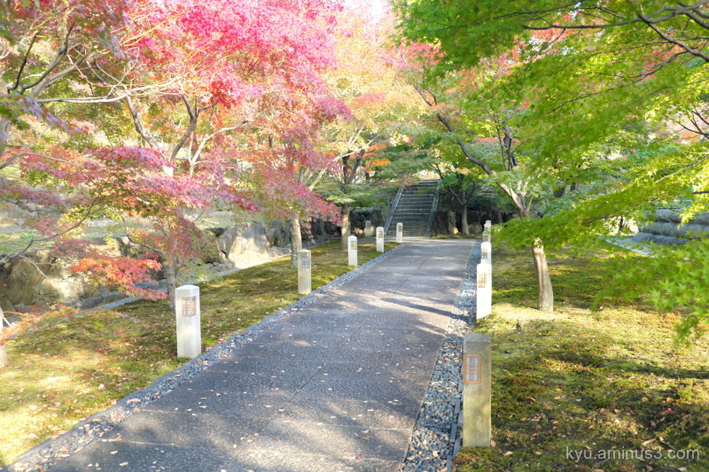 autumn afternoon-light red-maple Chihakuin temple