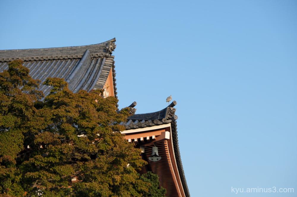 heron roof Chishakuin temple Kyoto