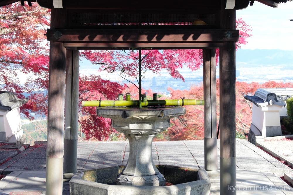 red-maple autumn Yoshiminedera temple Kyoto