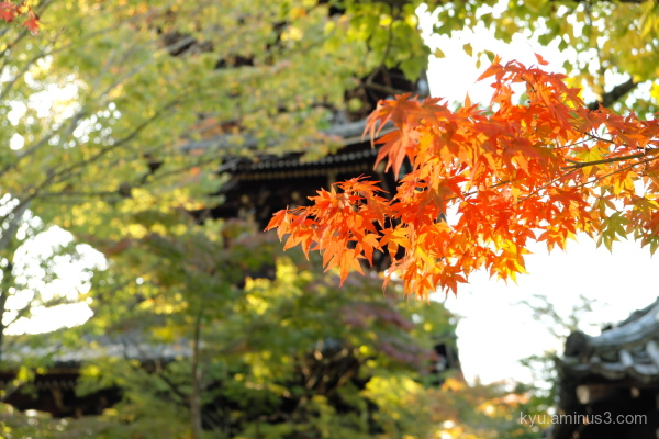 red-maple autumn pagoda Shinnyodo temple Kyoto