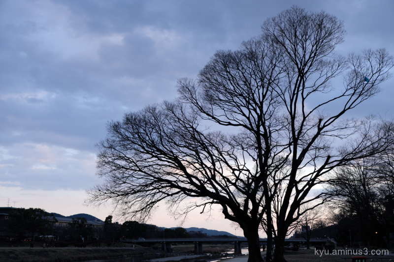winter late-afternoon tree silhouette