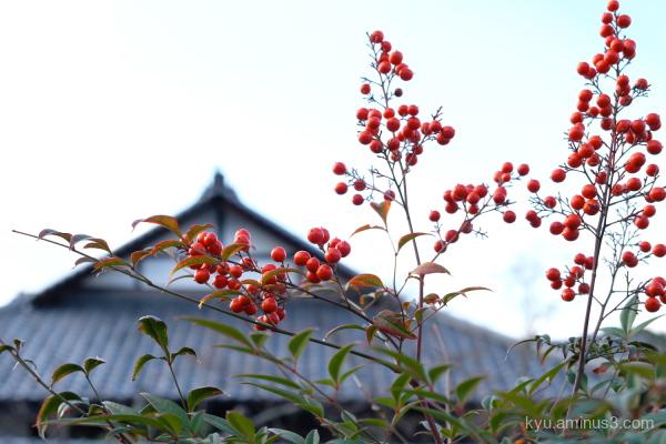nandina  berry Shinyodo temple Kyoto