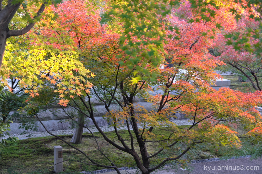 afternoon-light red-maple autumn Chishakuin temple