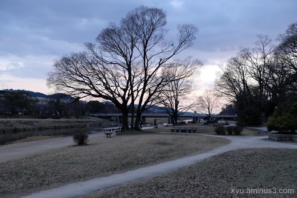 winter tree silhouettes