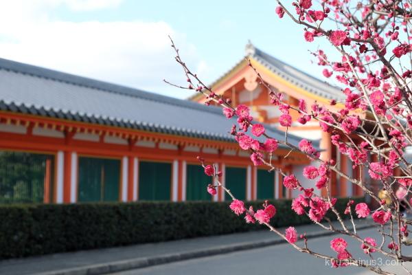 Japanese-plum Hojyuji Sanjyusangendo temple Kyoto