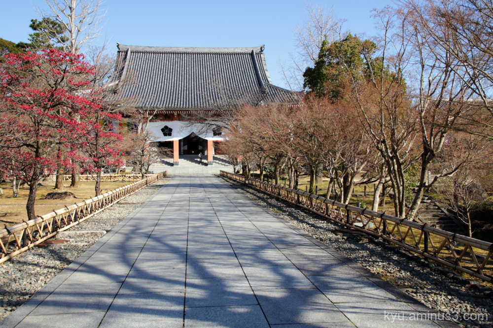 early-spring path plum Chishakuin temple Kyoto