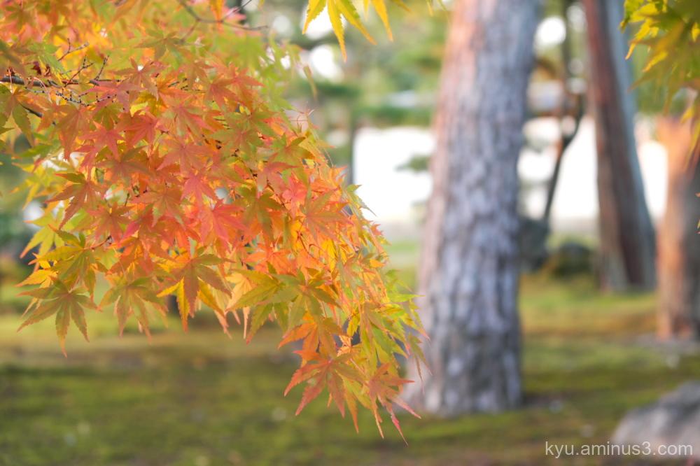 autum red-maple Chishakuin temple Kyoto