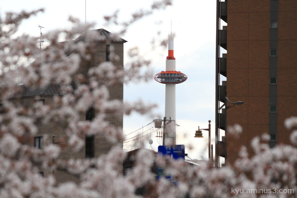 spring cherry blossoms Kyoto-tower Kyoto