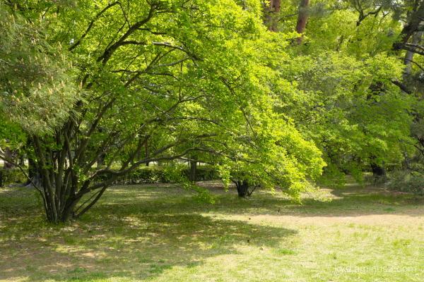 green-shade Gosho Kyoto