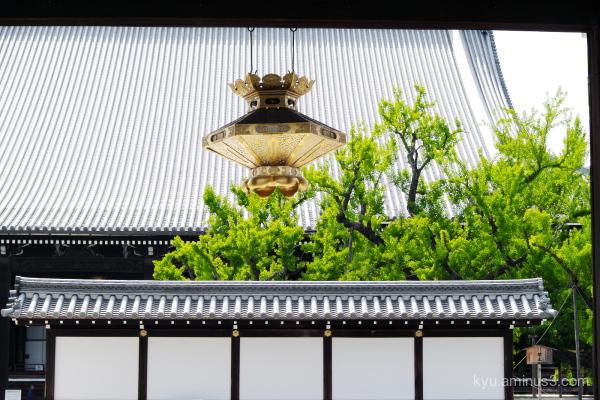 ginkgo Nishihonganji temple Kyoto