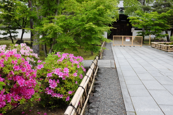 azalea Chishakuin temple Kyoto