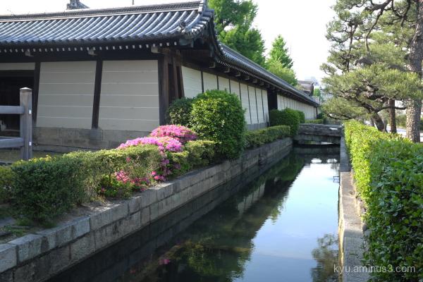 azalea blossoms Higashihonganji temple Kyoro