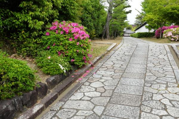 azalea flowers path Chishakuin temple Kyoto