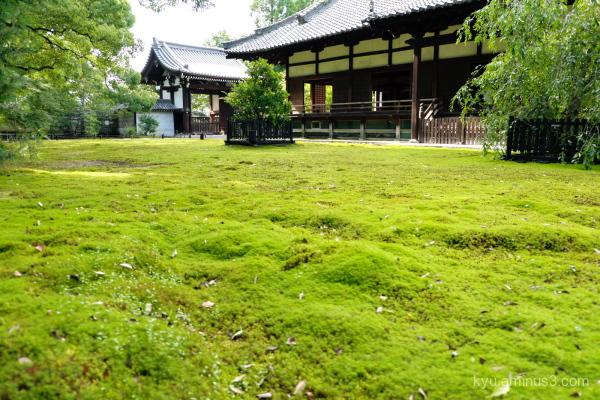 afternoon-light Shorenin temple Kyoto