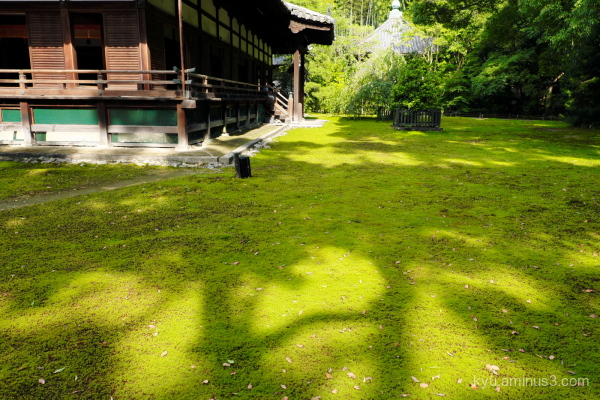 afternoon-light garden Shorenin temple Kyoto