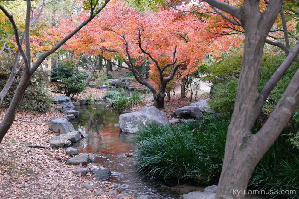 Walk in autumn colors