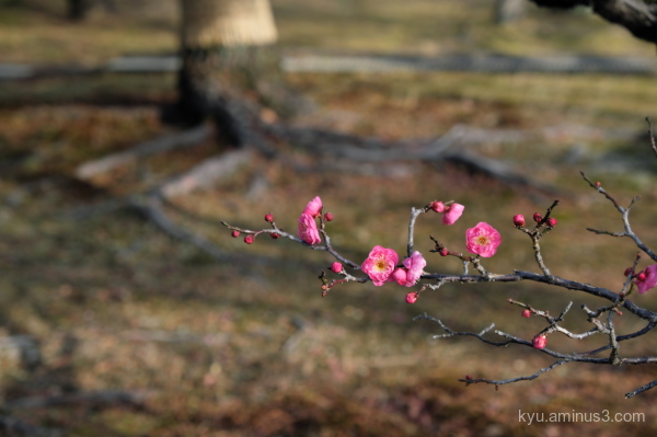 Sign of the early spring