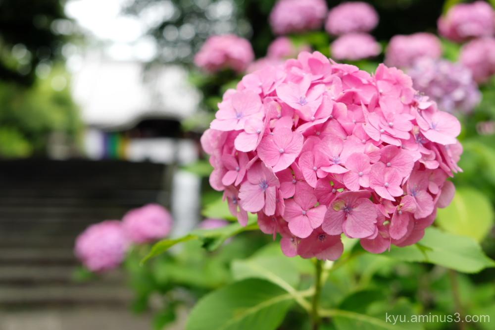 In the rainy season