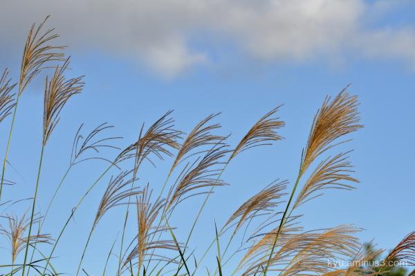 Feeling a breeze