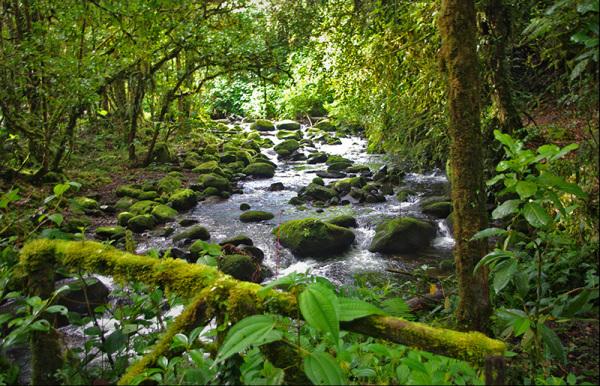 river, bridge ,forest,green,rocks