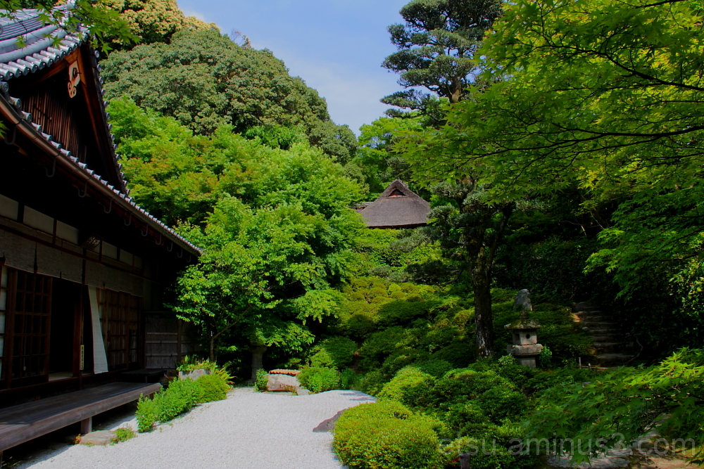 garden in konpokji temple 庭 金福寺