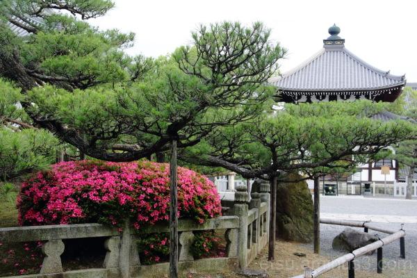 flower&temple in kurodani konkaikoumyouji 黒谷