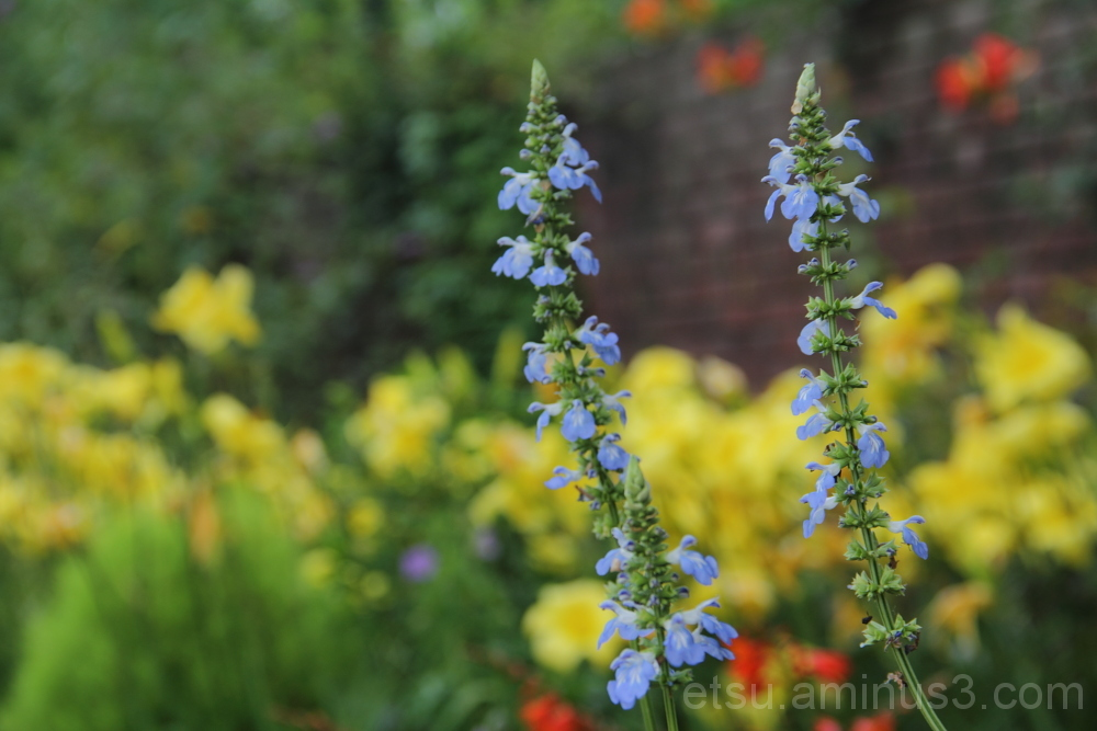beautiful flowers in English garden 花 英国風庭園 びわこ大津館