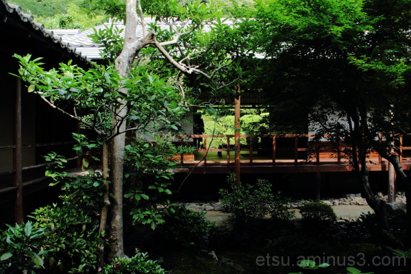 garden in Anrakuji temple 庭 安楽寺