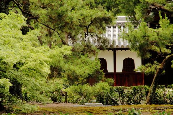 temple in the green kenninji temple 建仁寺