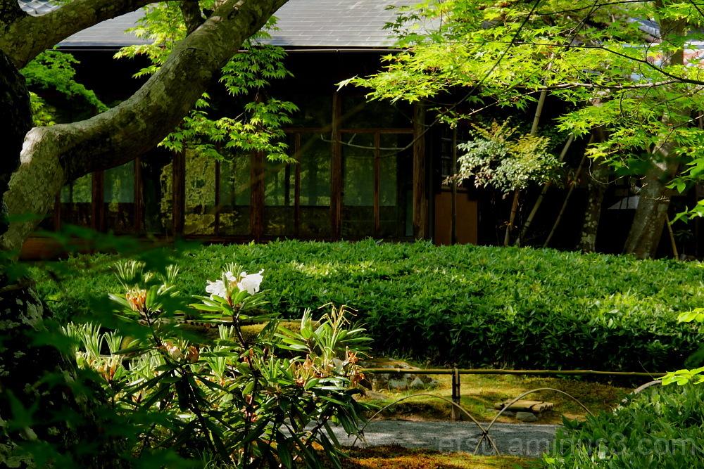 Garden in Hogenji temple 庭 宝厳寺