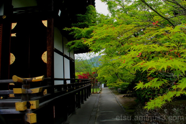 green leaves and temple 青もみじ 勧修寺