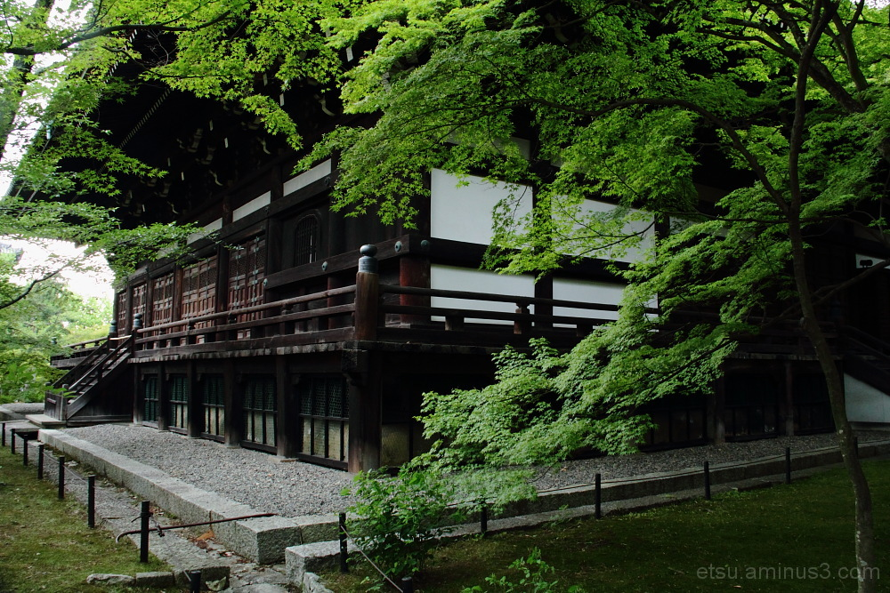 green leaves & temple 真如堂