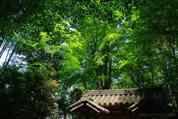 green leaves and the gate 地蔵院 竹の寺
