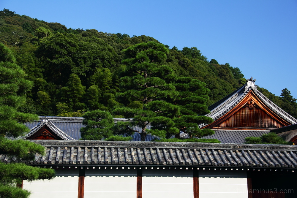 Two roofs at the temple 泉涌寺