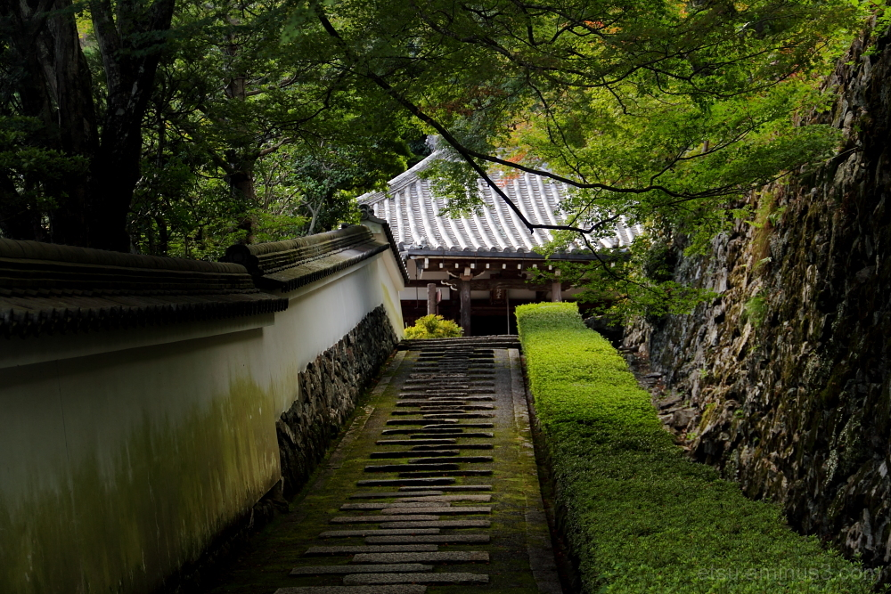 Covered with greens 善峯寺