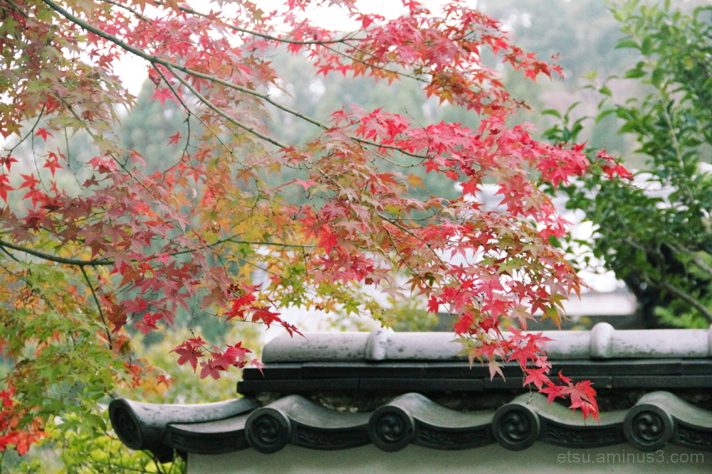 The appearance of the autumn 妙満寺