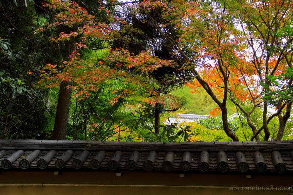 Enjoy colors 嵐山 祇王寺近く