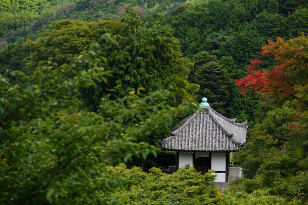 Lonely looking, but I like the hush. 善峯寺