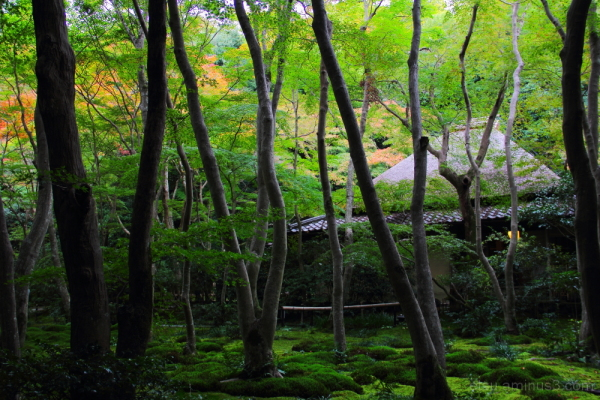 Covered with the green 祇王寺